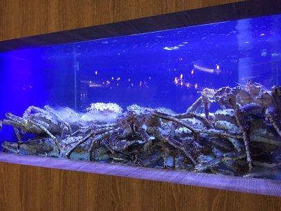 live-alaskan-king-crab